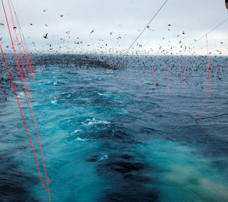 Balıkçılık Endüstrisinde Kuş Kontrolü